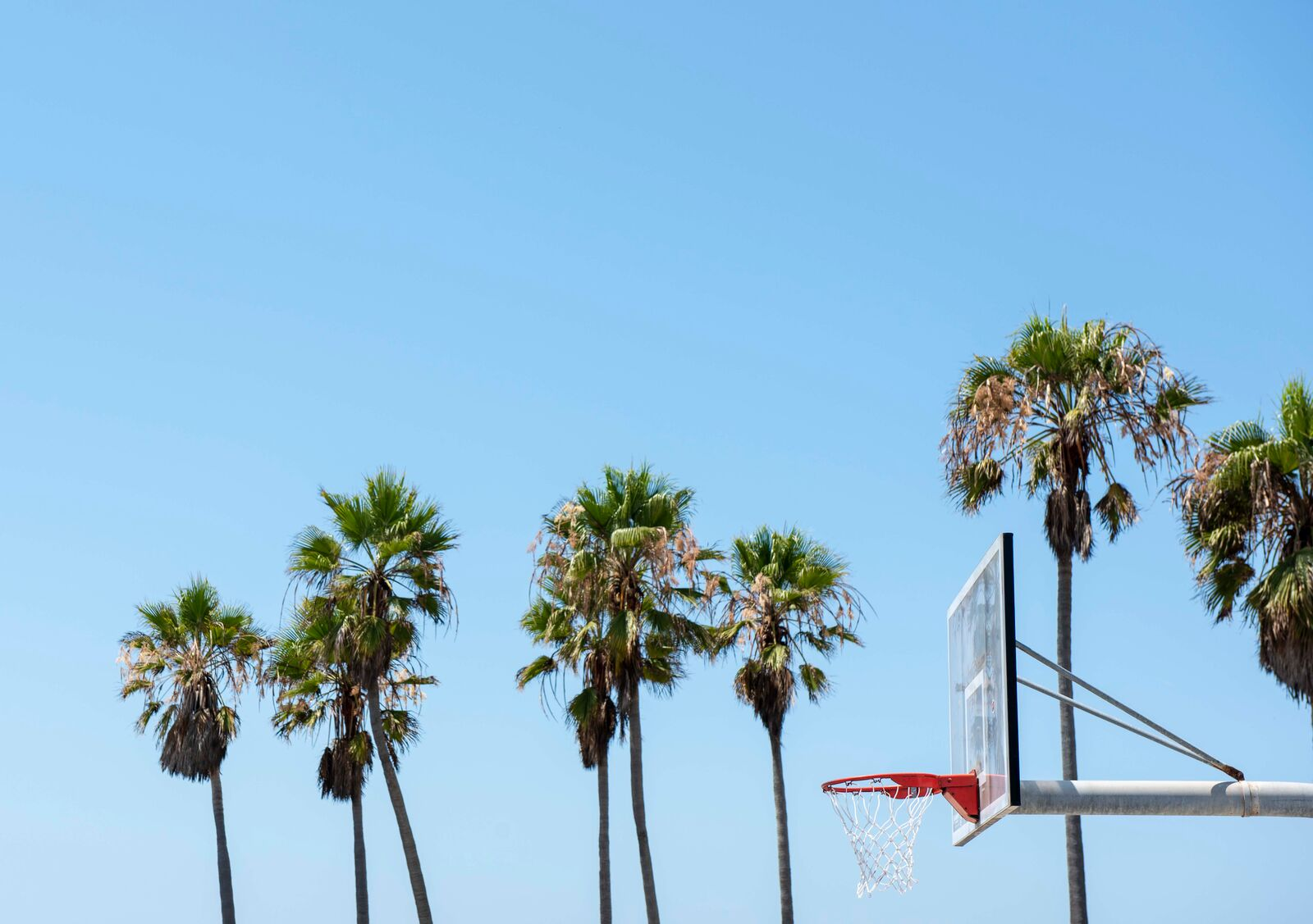 Backboard with palm trees in background
